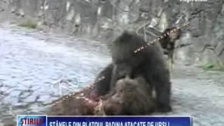 Stânele din Platoul Padina atacate de urşi !