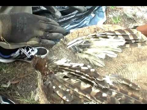 Dennis Banks - Honoring a Hawk ( he found on the roadside )