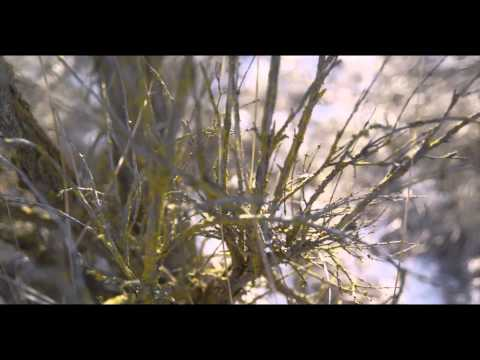 "S. Carey - ""Fire-scene"" (Official Video)"