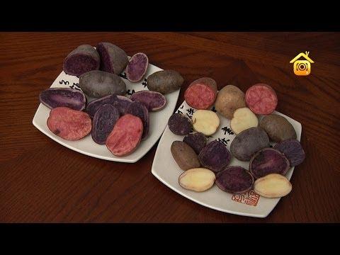 Цветная картошка - YouTube