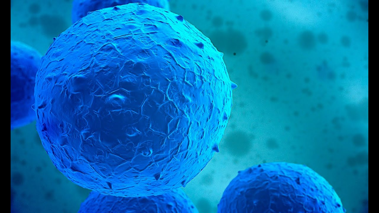 Update  Obama Lifts Ban On Embryonic Stem Cell Research