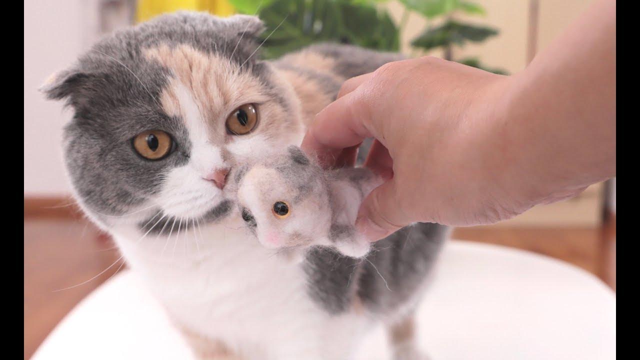 『萌貓』主人用貓毛做了一只貓,貓咪看到后一臉懵逼:這是我的崽? - YouTube