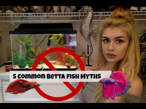 5 Things You've Heard about Betta Fish That AREN'T True