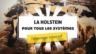 La Holstein pour tous les systèmes : l'élevage intensif