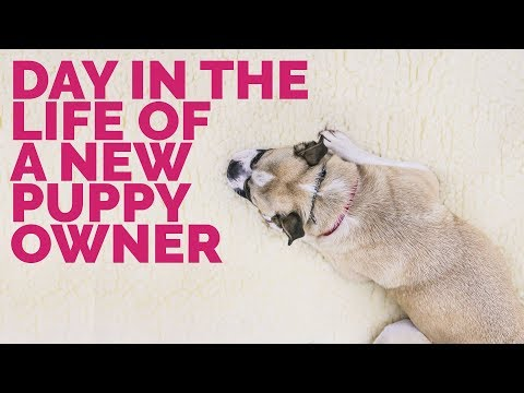 A Day in the Life of a New Puppy Owner