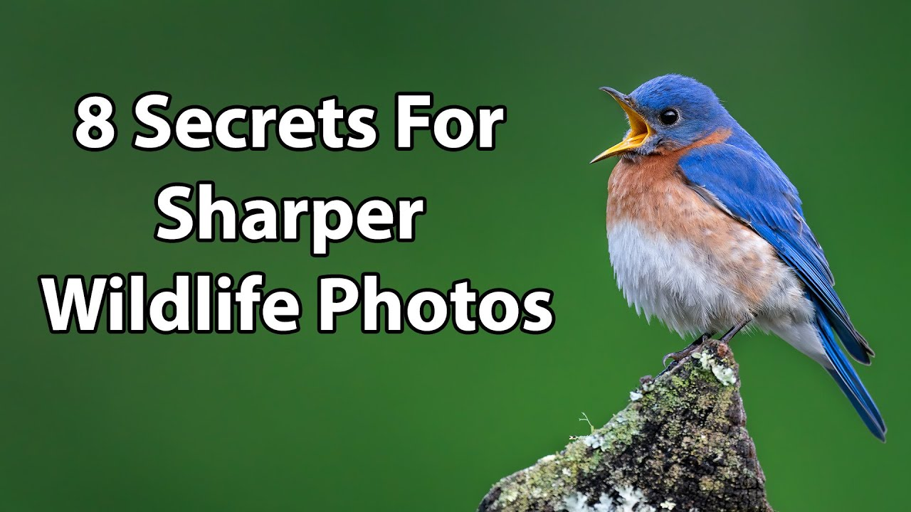 8 Secrets For Sharper Wildlife Photos