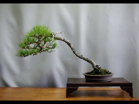 Saitama omiya bonsai museum 4k ultra hd doovi for Literati bonsai gallery