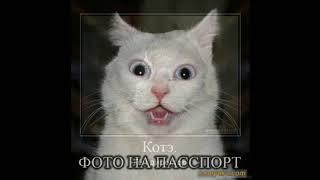 коты приколы, демотиваторы