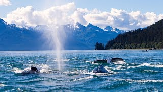 Whale Watching Boat Tour in Juneau, Alaska