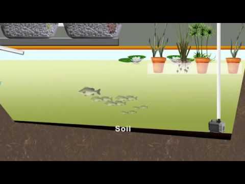 Growing Fish On Algae