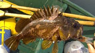 Capitola rock cod mackerel fishing for Capitola fishing report