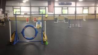 Eli Mach 2-queen City Dog Training Club