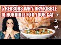 5 REASONS why dry kibble cat food is the WORST for your cat! 🙅♀️🙀