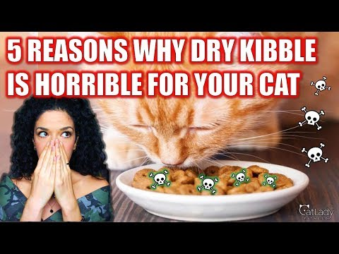 5 REASONS Why Dry Kibble Cat Food Is The WORST For Your Cat! 🙅‍♀️🙀