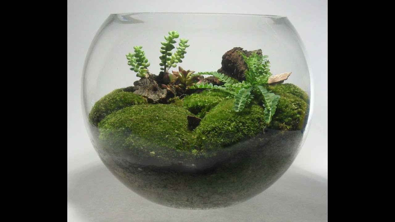 Fish bowl terrarium youtube for How to make a fish bowl