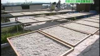 2009/5/3「三浦半島漁港巡りドライブ」