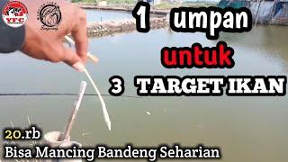 mancing ikan bandeng di tambak bayar harian | pemancingan tambak bandeng Tangerang