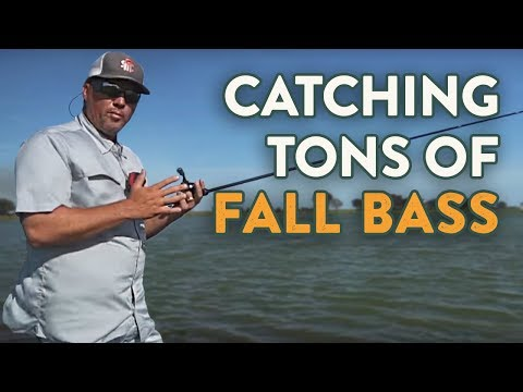 Catching Tons of Fall Bass From Ponds With Scott Martin!