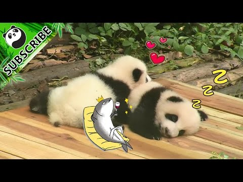 A Collection Of Happiness From Pandas | IPanda