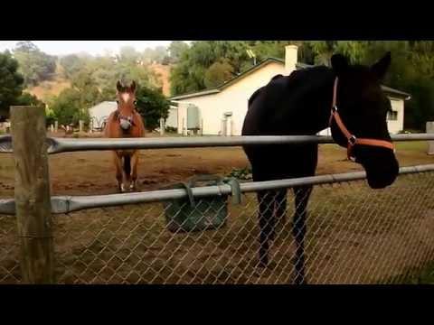 Horses at Buchan, Victoria, Australia