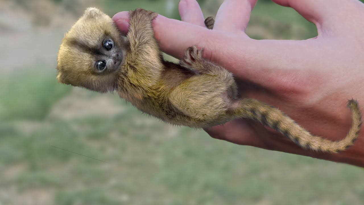 Download Most Amazing Exotic Animals You Can Own As A Pet
