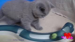Шон и интерактивный трек для кошек Catit Hagen