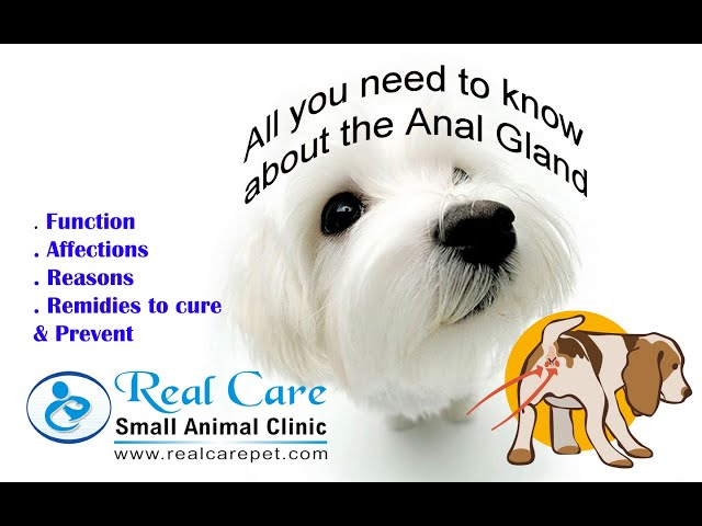 Anal Gland in pets... Important things to know...