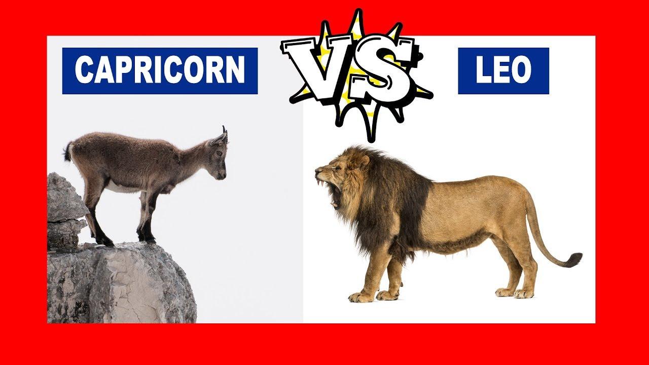 do leos and capricorns match