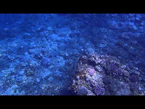 hqdefault - Pourquoi le chant des baleines s'entend-il à des milliers de kilomètres ?