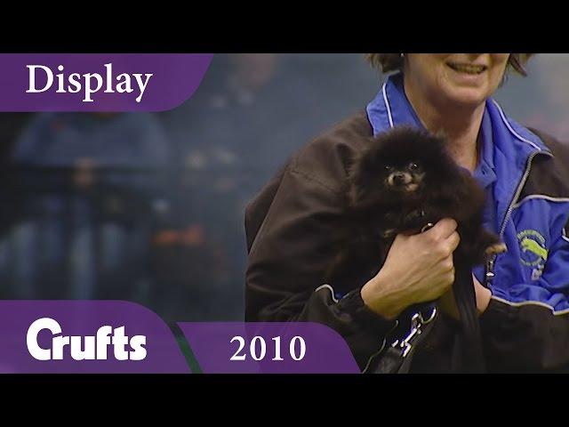 Amazing Rockwood Display Team perform at Crufts 2010 | Crufts Classics