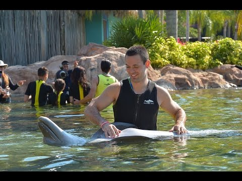 swimming with dolphins at Discovery cove Orlando