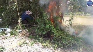 Đốt bắt sống ổ Rắn Độc cực hung cố thủ trong bụi cây/catch poisonous snakes