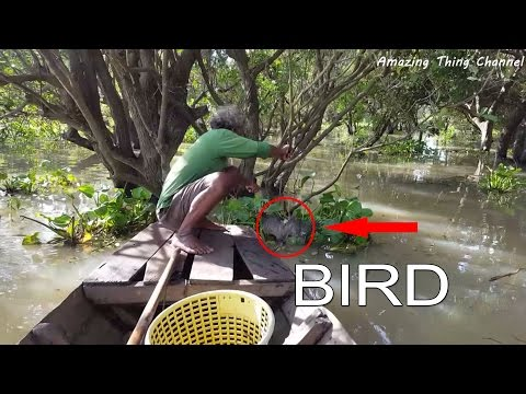 How to make flamingos bird trap in siem reap tonle sap lake