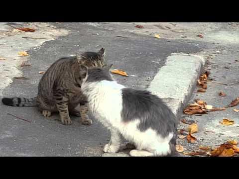 Tomcats fighting