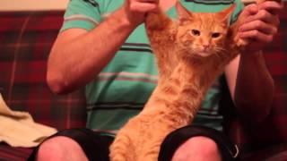 wbowerproductions - GG Network Partner Spotlight - Dubstep Cat