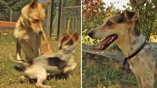 Cesar Millan Meets a FemaleObsessed Dog