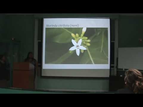 Island Ecology Course Presentations Pollinators