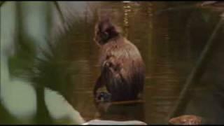 Клип-Эти смешные обезьяны.А.Иосипишин.mpg
