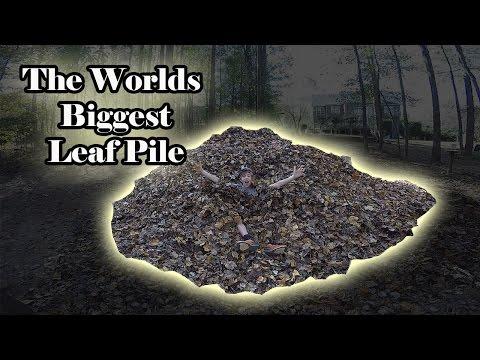 World's Biggest Leaf Pile!!!