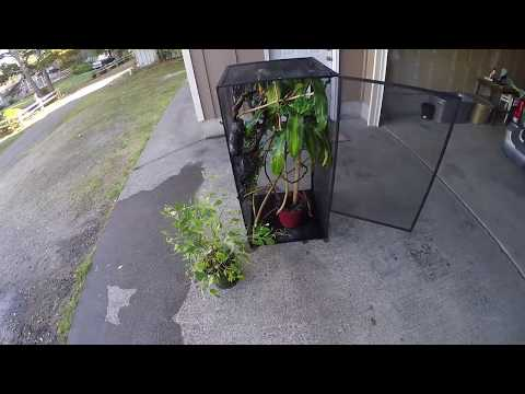 Panther Chameleon Setup Exoterra Rs400 Zoo Med Reptib
