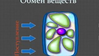 5 класс биология, Телякаева Э Ю