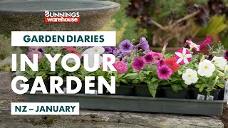 Gardening in January | New Zealand | Bunnings Garden Diary