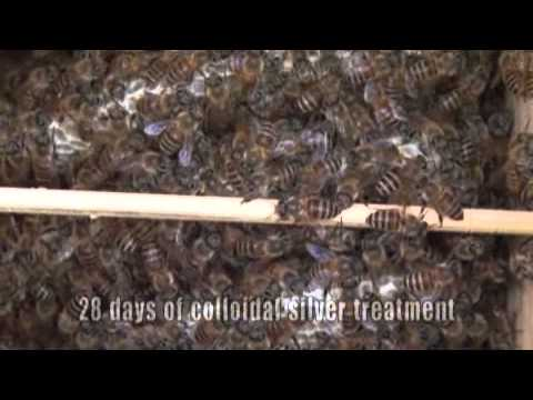 Cure for Sac Blood Virus Honey Bee