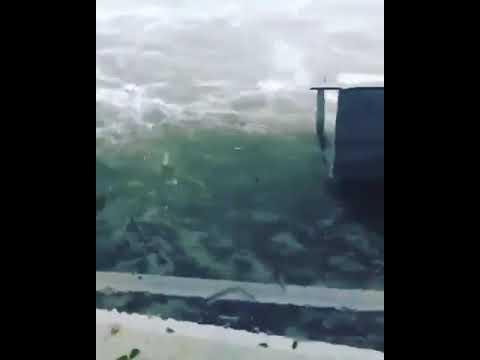 Puerto Rico Hurricane Maria Disaster : Green island area