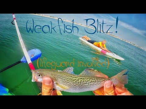 NJ Weakfish Blitz Fishing! (lifeguard Involved)...