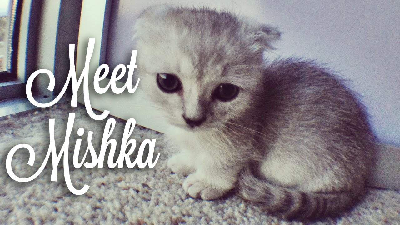 how to say kitten in japanese