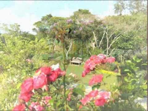 Jardin de rosas (garden roses) Lynn Anderson. traducida Español ...