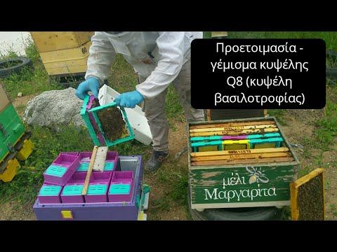 Κυψέλη Q8 TECHNOSET (Προετοιμασία για βασιλοτροφία )