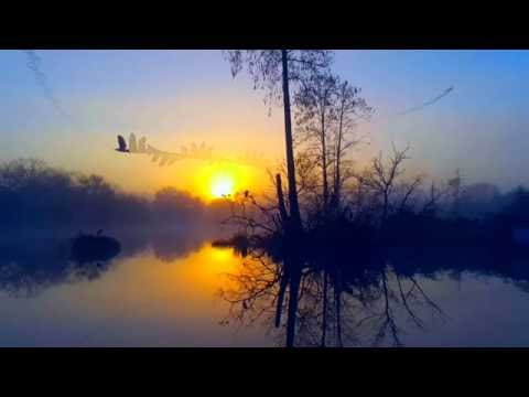Relaxing Nature 4K UHD - Surreal Sunrise - Florida Bird Colony Sounds - No Music