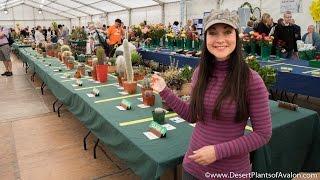The Northern Ireland Cactus & Succulent Show, Belfast 2016
